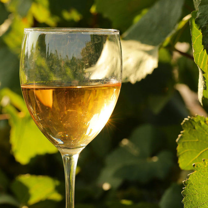 Glass of white wine in a vineyard
