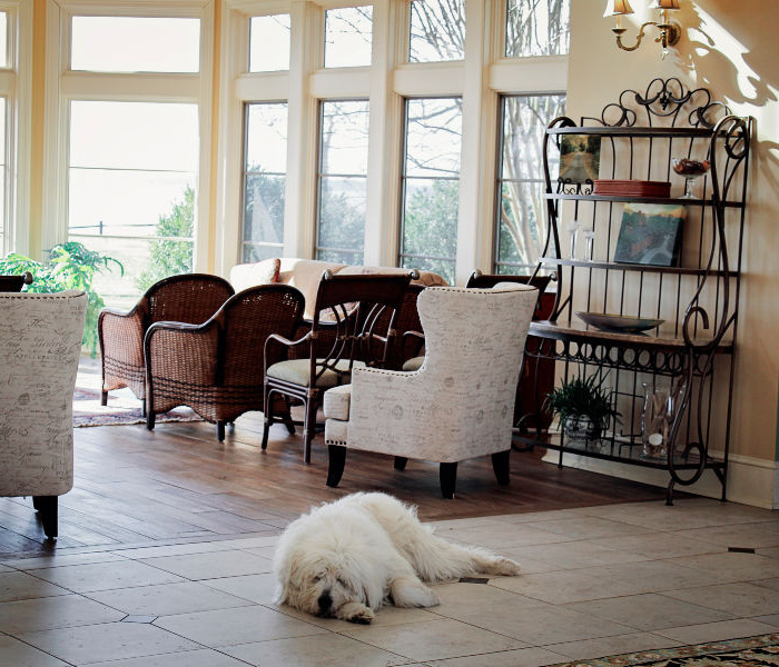 Lizzie the Dog - Great Oak Manor Pet-friendly Hotel